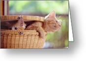 Animal Head Greeting Cards - Kittens In Basket Greeting Card by Sarahwolfephotography