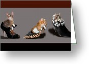 Pet Picture Greeting Cards - Kittens that love Shoes Greeting Card by Gina Femrite