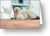Green Eyes Greeting Cards - Kitties Sisters Greeting Card by Cindy Loughridge