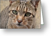 Victoria Wise Greeting Cards - Kitty Cat Greeting Card by Victoria Wise