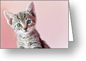 Camera Greeting Cards - Kitty Greeting Card by Nevena Uzurov