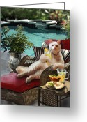Pet Picture Greeting Cards - Kitty on lounging chair having a drink    Greeting Card by Gina Femrite