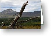 Gaelic Prints Greeting Cards Greeting Cards - Knarled Greeting Card by Paul  Mealey