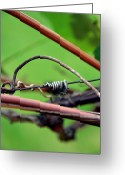 Vine Mixed Media Greeting Cards - Knotted Greeting Card by Angelina Vick