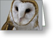 Snowy Night Greeting Cards - Knowing Barn Owl Greeting Card by LeeAnn McLaneGoetz McLaneGoetzStudioLLCcom