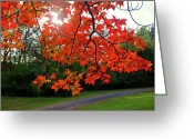 Guywhiteleyphoto.com Greeting Cards - Knox Park 8444 Greeting Card by Guy Whiteley