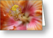 Beauty Love Greeting Cards - Ko Aloha Makamae e ipo Aloalo Exotic Tropical Hibiscus Maui Hawaii Greeting Card by Sharon Mau