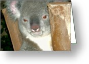 Poser Greeting Cards - Koala Greeting Card by Ellen Henneke
