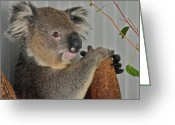 Sharp Claws Greeting Cards - Koala I Greeting Card by Kirsten Giving
