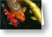 Transformative Art Greeting Cards - Koi Greeting Card by Lisa Redfern