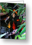 Carp Greeting Cards - Koi Pond Greeting Card by Nancy Mueller
