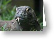 Poisonous Greeting Cards - Komodo Dragon Portrait Greeting Card by Brian M Lumley