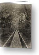 Shade Greeting Cards - Koto-in Zen Temple Forest Path - Kyoto Japan Greeting Card by Daniel Hagerman