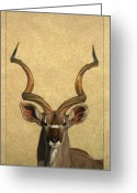 Wildlife Drawings Greeting Cards - Kudu Greeting Card by James W Johnson