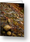 Ost Photo Greeting Cards - Kziv Stream Greeting Card by Nadya Ost