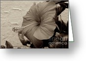 Texture Flower Photo Greeting Cards - La Flora  Greeting Card by Sean Cupp