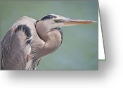 Blue Heron Photo Greeting Cards - La Garza Greeting Card by Steven Sparks