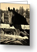 Quarter Horses Greeting Cards - LaBounty Quarter Horse Greeting Card by Barbara St Jean