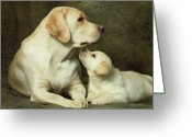Close-up Greeting Cards - Labrador Dog Breed With Her Puppy Greeting Card by Sergey Ryumin