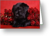 Fourteen Greeting Cards - Labrador puppy with red roses Greeting Card by Waldek Dabrowski
