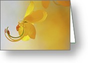 Fragility Greeting Cards - Laburnum Greeting Card by Ana Encinas