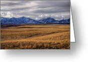 Open Range Greeting Cards - Ladies Greeting Card by Wayne Stadler