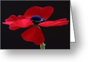 Flower Over Black Photo Greeting Cards - Lady in Red Greeting Card by Juergen Roth