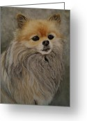 Dogs Pastels Greeting Cards - Lady Greeting Card by Joanne Grant