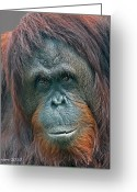 Ape. Great Ape Greeting Cards - Lady Of The Forest Greeting Card by Larry Linton