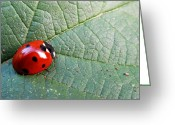 Olivia Narius Greeting Cards - Ladybird Greeting Card by Olivia Narius