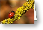 Lichen Image Greeting Cards - Ladybird On Branch Greeting Card by MarkBridger