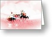 Black Point Greeting Cards - Ladybirds I Greeting Card by Mandy Tabatt