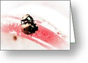 Black Point Greeting Cards - Ladybirds VI Greeting Card by Mandy Tabatt