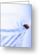 Prints Pyrography Greeting Cards - Ladybug  Greeting Card by Lady Angel