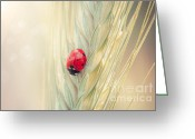 Cornfield Greeting Cards - Ladybug on a spike Greeting Card by Sabino Parente