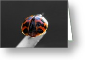 Photography Tk Designs Greeting Cards - Ladybug Spread Your Wings Greeting Card by Tracie Kaska