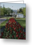 Spring Scenes Greeting Cards - Lafayette Park Spring Tulips Lead Greeting Card by Stephen St. John