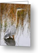 Bird Cards Greeting Cards - Lake Carmi Visitor Greeting Card by Deborah Benoit