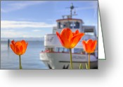 Spring Tulip Greeting Cards - Lake Constance Greeting Card by Joana Kruse