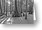 Louisiana Greeting Cards - Lake Martin Greeting Card by Scott Pellegrin