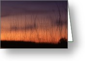 Reeds Reflections Greeting Cards - Lake Reeds at Sunset Greeting Card by Timothy Johnson