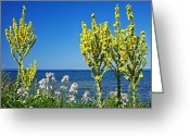 Babys Greeting Cards - Lake-side Flowers Greeting Card by Bjorn Svensson