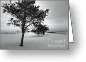 Winter Trees Greeting Cards - Lakeside Greeting Card by David Bearden