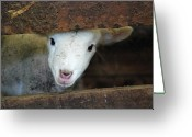 Animal Head Greeting Cards - Lamb Greeting Card by Christy Majors