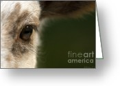 Sheep Greeting Cards - Lamb Eyelashes Greeting Card by Warren Sarle