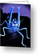 Grasshopper Greeting Cards - Land Lubber Inverted Greeting Card by DigiArt Diaries by Vicky Browning