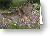 Bird Of Prey Digital Art Greeting Cards - Landing Approach Greeting Card by Val Saxby