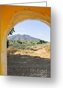 Archway Greeting Cards - Landscape with agave cactus field in Mexico Greeting Card by Elena Elisseeva