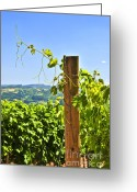 Grape Greeting Cards - Landscape with vineyard Greeting Card by Elena Elisseeva