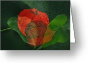 Pflanzen Greeting Cards - Lantern flower Greeting Card by Manfred Lutzius